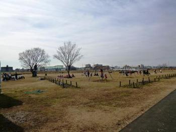多摩川二子橋公園.jpg