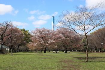 砧公園.jpg